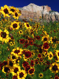 Summer Flowers, Springdale, Utah Photographic Print by David Carriere