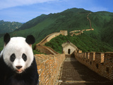 Panda and Great Wall of China Fotografiskt tryck av Bill Bachmann