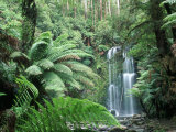 Triplet Falls, Victoria, Australia Photographic Print by Peter Adams
