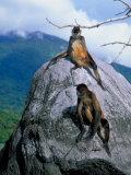 2 Monkeys, Isla de Ometepe in Lake Nicaragua, Giclee Print