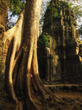 Angkor, Ta Prohm, 400-year-old Tree, Cambodia Photographic Print by Walter Bibikow