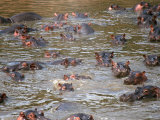 Hippos in River, Kenya Photographic Print by Michele Burgess
