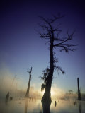 Sunrise at the Alligator Bayou Swamp, Louisiana Photographic Print by Kevin Leigh
