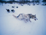 Dog Sled, Karasjok Finn, Norway Photographic Print by Dan Gair