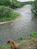 Brown Bear Sitting by River Photographic Print by Yvette Cardozo