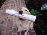Golden Retriever with Newspaper in its Mouth Photographic Print by Jim McGuire