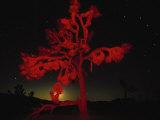 Joshua Tree National Monument, CA Fotografie-Druck von Robin Hill