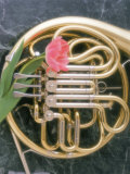 French Horn with a Tulip Photographic Print by Martin Fox