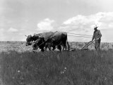 Farmer Steering Plow Pulled by Two Bulls, Photographic Print