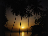 Silhouette of Palm Trees, Caribbean Photographic Print by Mark Dyball