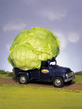 Lettuce in Bed of Miniature Truck Photographic Print by Peter Ardito