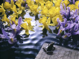 Frog, Sheet Music and Flowers in Water Photographic Print by Howard Sokol