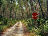 Central Florida, Stop Sign, Ocala Forest Road Photographic Print by Pat Canova