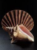 Sea Shells Fotografisk tryk af Terry Why