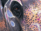 Goa, India, Close-up of Elephants Eye Fotoprint van Peter Adams