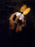 Hand with Egg Shell and Butterfly Fotoprint van Howard Sokol