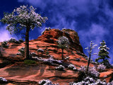 Clearing Winter Storm, Zion National Park, UT Photographic Print by Russell Burden