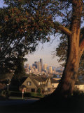 Skyline Seen from Behind Tree, Seattle, WA Photographic Print by Jim Corwin