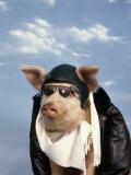 Pig Dressed As Pilot Lámina fotográfica por Kurt Freundlinger