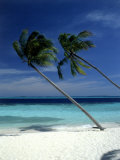 Palm Trees on Tropical Beach, Maldives Photographic Print by Frank Chmura