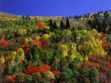 Trees with Fall Foliage Photographic Print by Richard Stockton