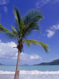 Palm Tree, Magens Bay, St. Thomas, USVI Photographic Print by Jim Schwabel