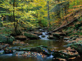 Ricketts Glen State PArk, PA Photographic Print by Jim Schwabel