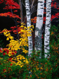 Fall Color, Old Forge Area, Adirondack Mountains, NY Fotografisk tryk af Jim Schwabel