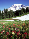 Alpine Meadow & Mount Rainier, Mount Rainier National Park, USA Photographic Print by Mark Hamblin