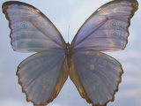 Butterfly with Open Wings Photographic Print by Jim McGuire