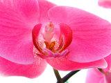 Orchids at Spring Garden Show, FL Photographie par Pat Canova