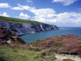 Isle of Wight, Summer Photographic Print by Harold Taylor