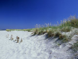Sand Dunes and Marram Grass, West Sussex, UK Photographic Print by Ian West