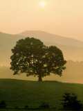 Foggy Sunrise in Cades Cove, TN Photographic Print by Willard Clay
