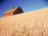 Barn in Wheat Field Photographic Print by Dean Berry