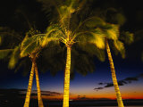 Palm Trees at Dusk, Waikiki Beach, HI Photographic Print by Walter Bibikow