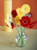 Red and Yellow Gerbera Daisies Photographic Print by Casey McNamara