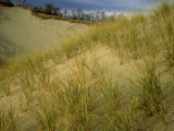 Grasses on Dunes Along Lake Michigan, MI Photographic Print by Willard Clay