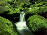 Moss Covered Rocks Along Roaring Fork, TN Photographic Print by Willard Clay