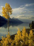 Evening Light on Aspen Trees Along the Shore of Jackson Lake, Wyoming Photographic Print by Willard Clay