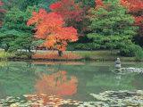 Japanese Tea Garden, WA Photographic Print by Jim Corwin