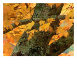 North Carolina Autumn Photographic Print by Vicky Brago-Mitchell
