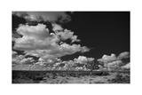 Lone Cedar Tree, New Mexico Impressão fotográfica por Steve Gadomski