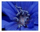 Blue Fairy Dust Photographic Print by Anna Williams
