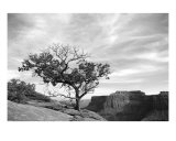 Lone Tree Over Canyonlands Photographic Print by Johnny Kurtz