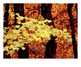 Tennessee Autumn Leaves Photographic Print by Vicky Brago-Mitchell