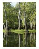 Early Morning In The Mississippi Swamps Photographic Print by Jeff Rollinger