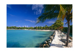 Blue Lagoon With Palm Trees, Aruba Photographic Print by George Oze