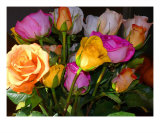 A Palette Of Roses Photographic Print by Susan Lipschutz