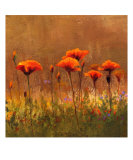 California Poppies 2 Photographic Print by Wendy Kroeker (Erhardt)